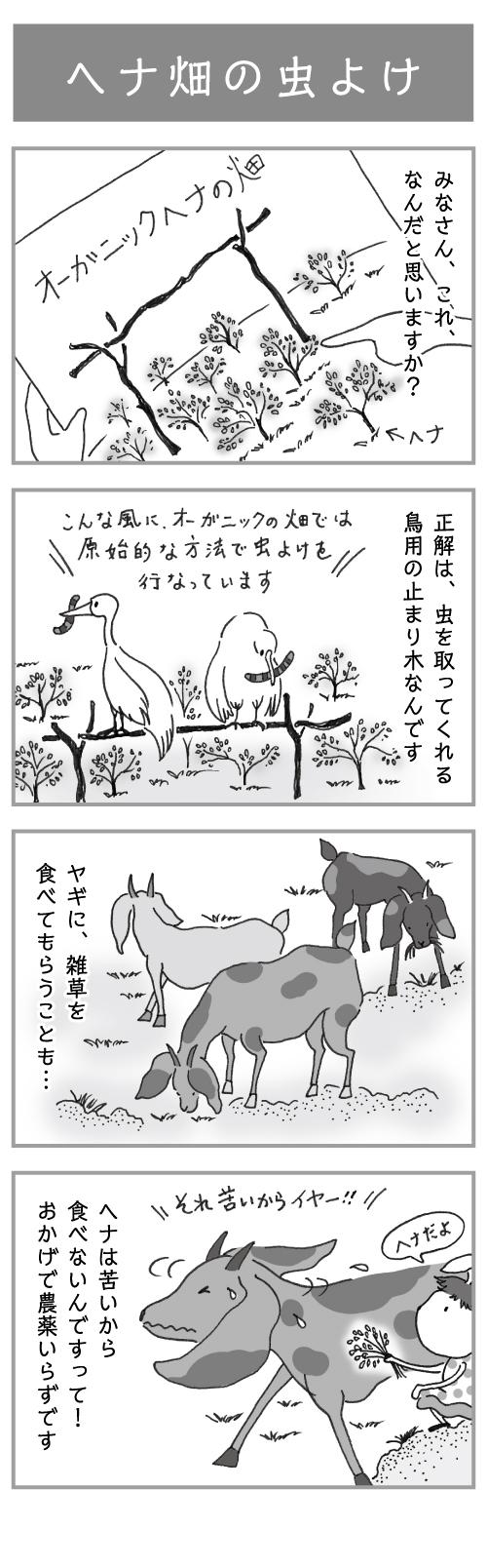 4コマ漫画「ヘナ畑の虫よけ」